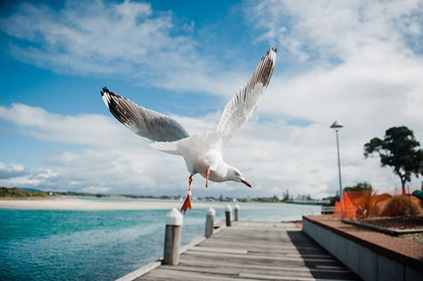 Picture of Seagull on the deck.